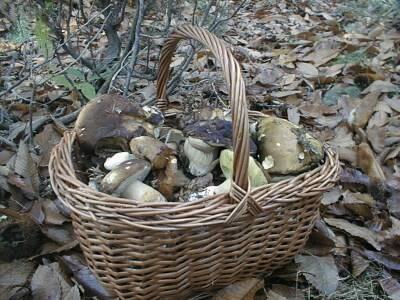 Alla ricerca di funghi in Val Fontanabuona.