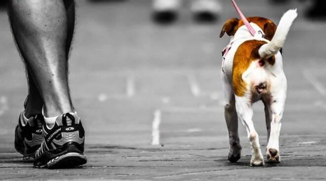Una cane portato a passeggio per espletare i propri bisogno fisiologici.