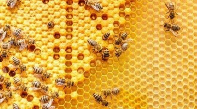 Miele e Api, cresce il consumo in Liguria.