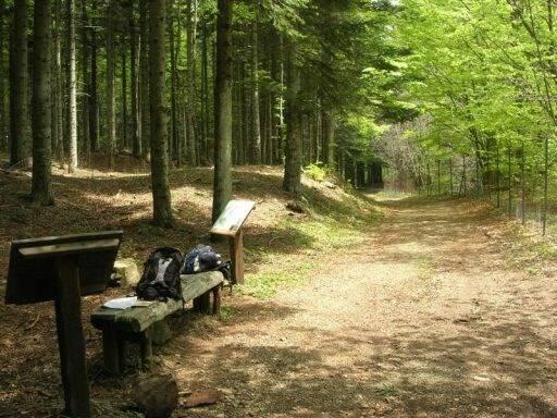 La strada delle Lame nel Parco dell'Aveto.