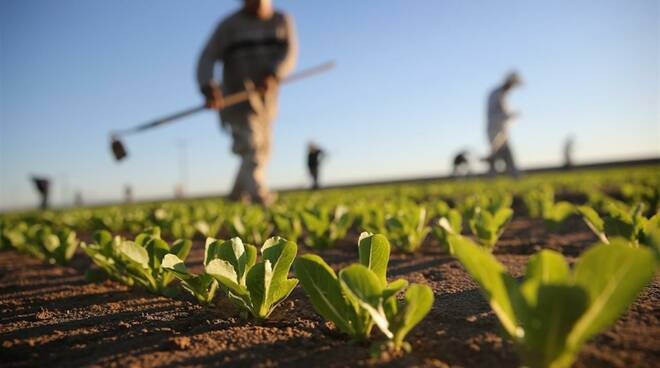agricoltura, contadino