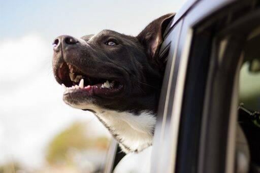 Cane affacciato dal finestrino della macchina