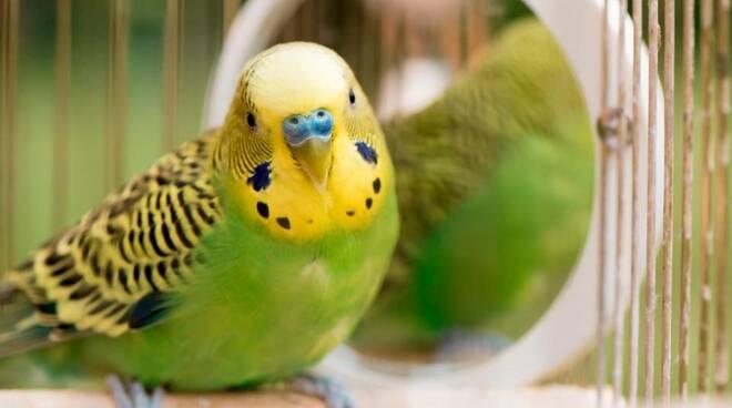 pappagallo, animale