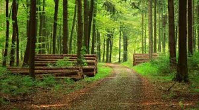 Silvicoltura dei boschi.