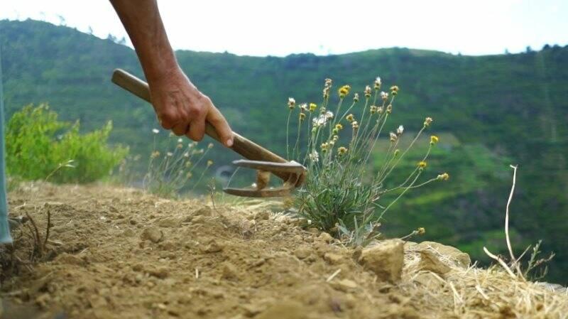 agricoltura, erba, taglio