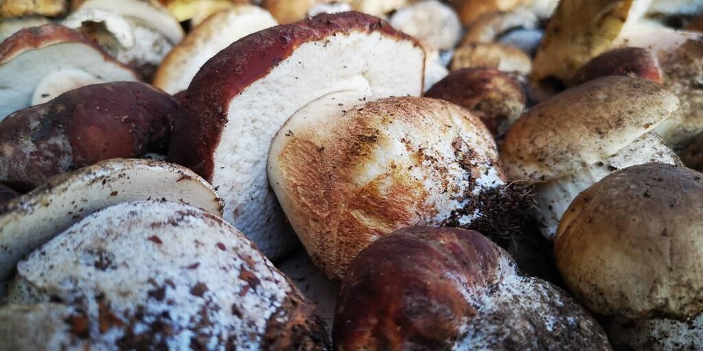 funghi, porcini