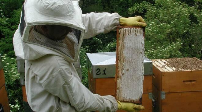Un apicoltore ligure.