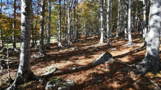 Un bosco del Parco dell'Aveto.