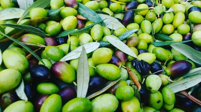 olive, olio, frantoi