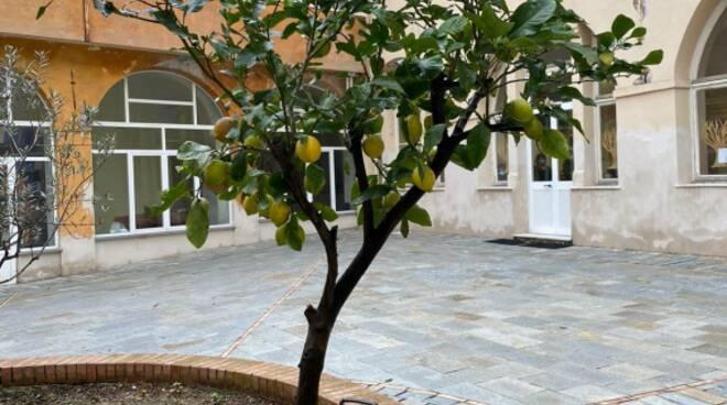 albero di limoni, scuola antola, rapallo