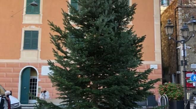 Il nuovo abete posizionato a Camogli per le decorazioni natalizie 2020.