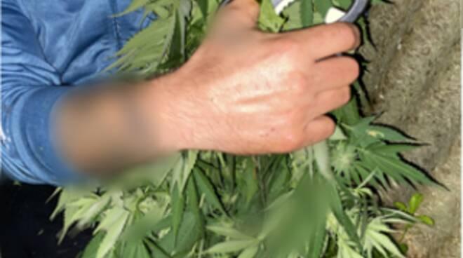 marijuana, polizia, baby gang