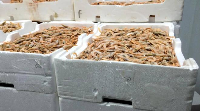 prodotti ittici, guardia costiera, sequestro