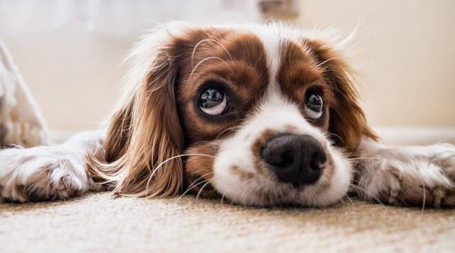 Un cane, il miglior amico dell'uomo.