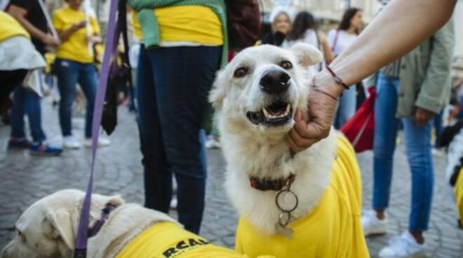 Cani accuditi da volontari di Arcaplanet.