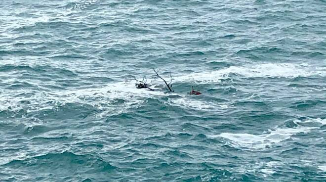 Pino della carega in mare