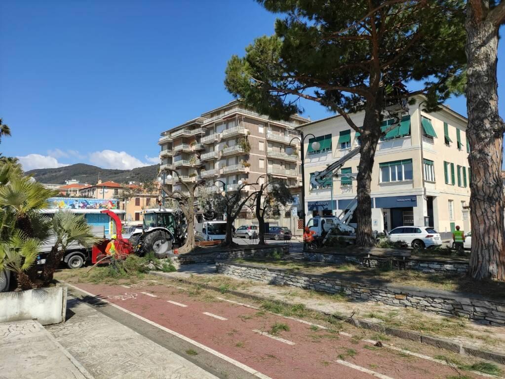 Corso Colombo a Chiavari: lavori di eliminazione dei nidi di processionaria.