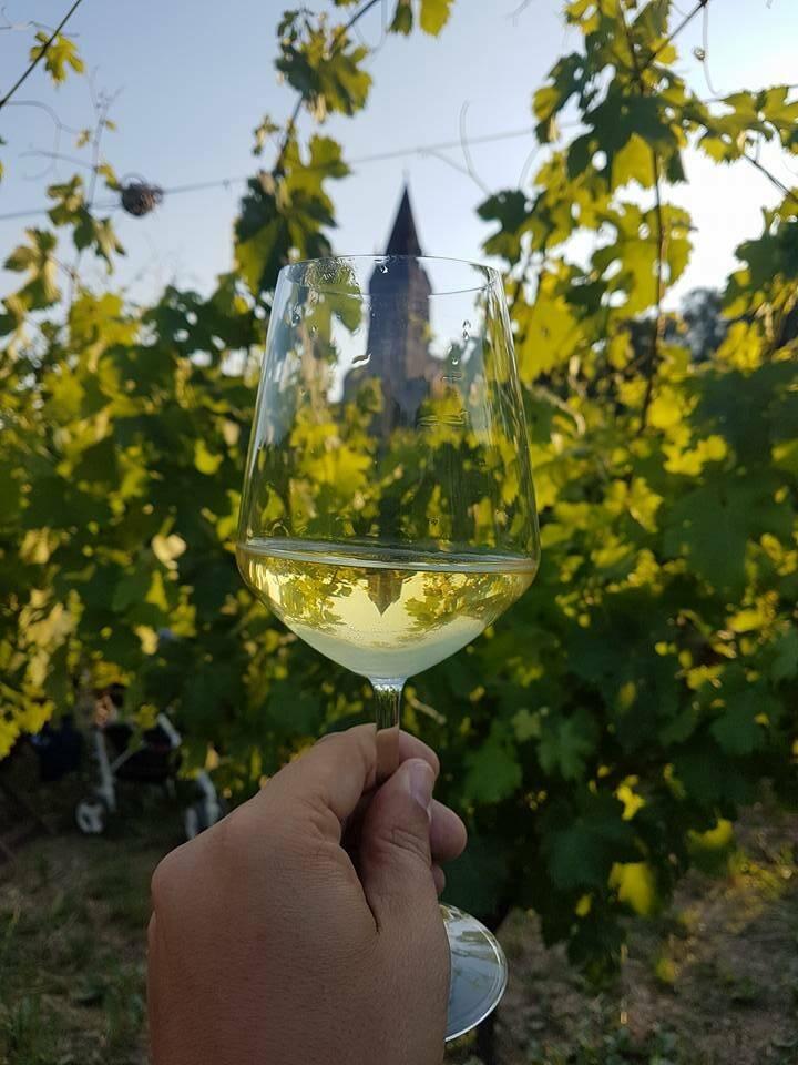 vino, enoteca