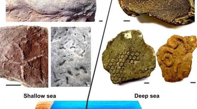 oceano, fossili