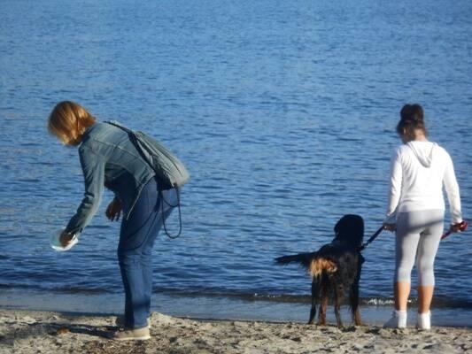 signora pulisce popò di cane