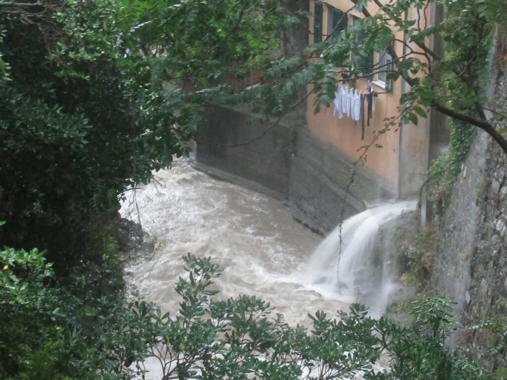 rio gentile a Camogli
