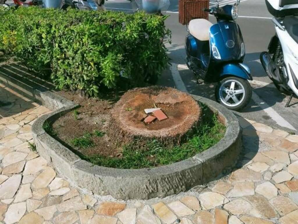 Santa tronco d'albero