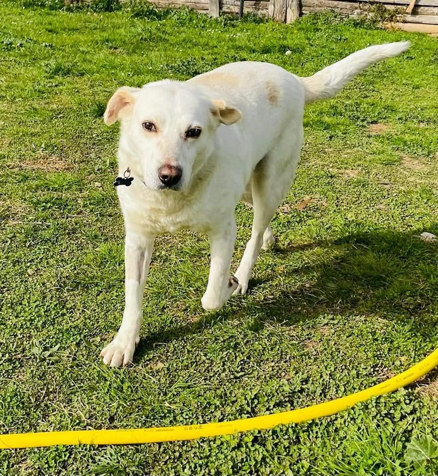 Adottaliguria: Nenni, cane perfetto, cerca casa
