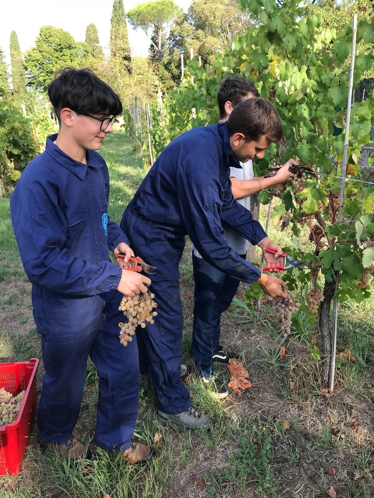 Viticoltura: i vini del Levante genovese tutelati da un consorzio